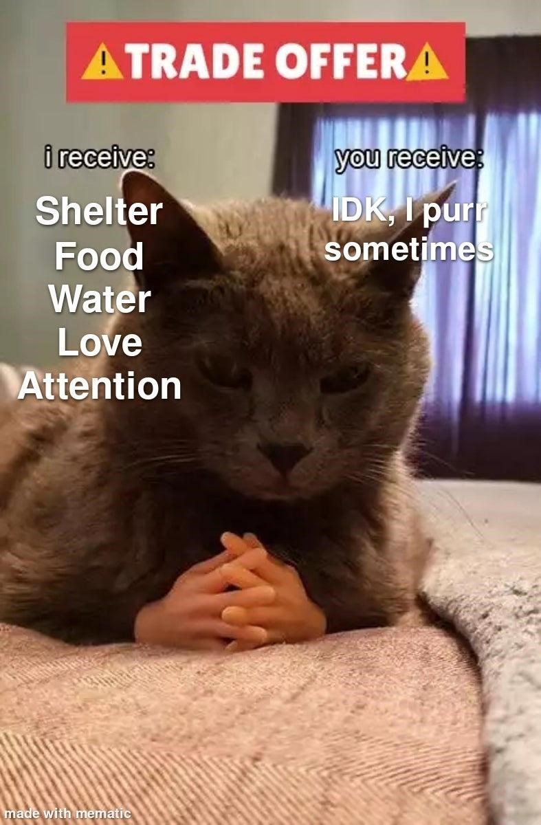 Cat - ATRADE OFFERA i receive: you receive IDK, I purr sometimes Shelter Food Water Love Attention made with mematic