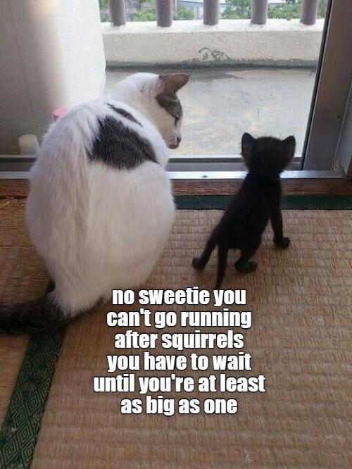 cat memes - 9609641984