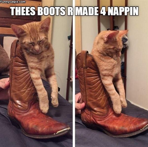 cat memes - 9609642240