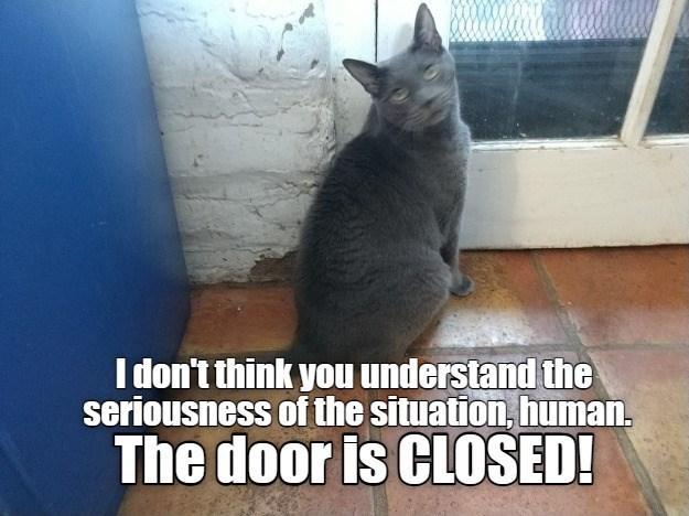 cat memes - 9609642496