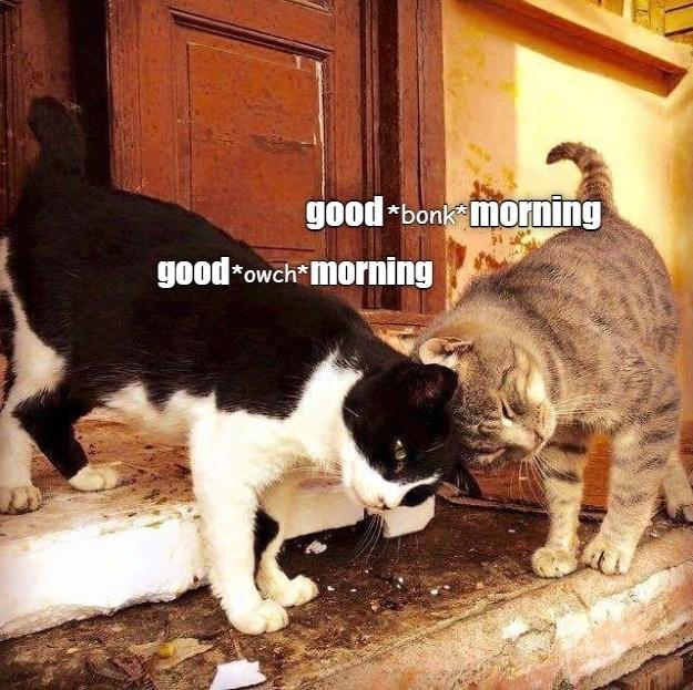 cat memes - 9609642752