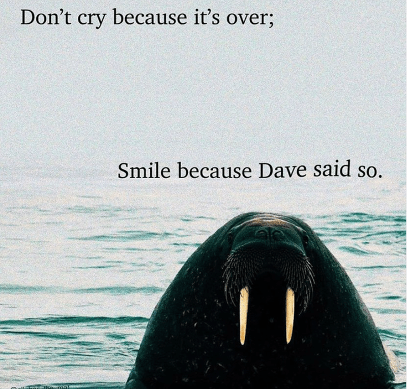 Water - Don't cry because it's over; Smile because Dave said so.