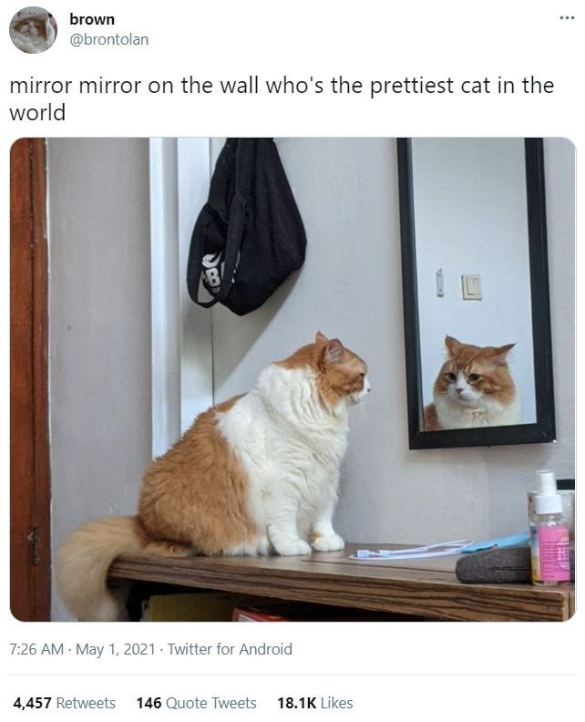 Brown - brown ... @brontolan mirror mirror on the wall who's the prettiest cat in the world 7:26 AM May 1, 2021 Twitter for Android 4,457 Retweets 146 Quote Tweets 18.1K Likes