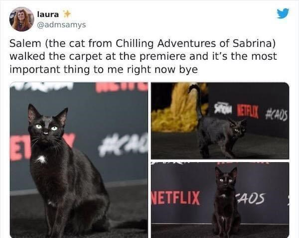 Cat - laura @admsamys Salem (the cat from Chilling Adventures of Sabrina) walked the carpet at the premiere and it's the most important thing to me right now bye S ETFLIX #CAOS ET NETFLIX AOS