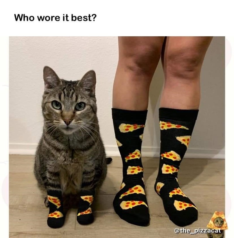 Cat - Who wore it best? @the_pizzacat