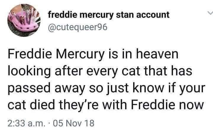 Organism - freddie mercury stan account @cutequeer96 Freddie Mercury is in heaven looking after every cat that has passed away so just know if your cat died they're with Freddie now 2:33 a.m. · 05 Nov 18