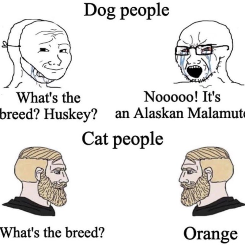 Forehead - Dog people What's the Nooooo! It's breed? Huskey? an Alaskan Malamute Cat people What's the breed? Orange