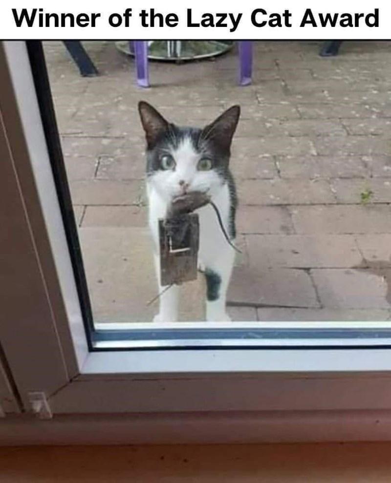 Cat - Winner of the Lazy Cat Award