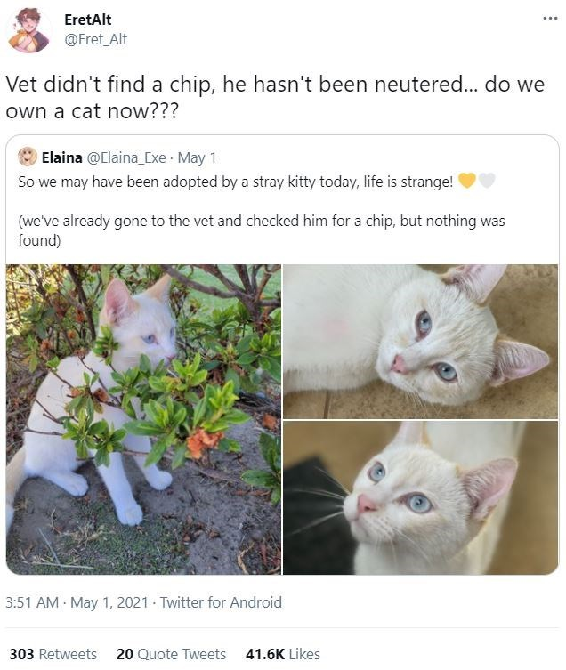 Cat - EretAlt ... @Eret_Alt Vet didn't find a chip, he hasn't been neutered... do we own a cat now??? Elaina @Elaina_Exe May 1 So we may have been adopted by a stray kitty today, life is strange! (we've already gone to the vet and checked him for a chip, but nothing was found) 3:51 AM May 1, 2021 Twitter for Android 303 Retweets 20 Quote Tweets 41.6K Likes