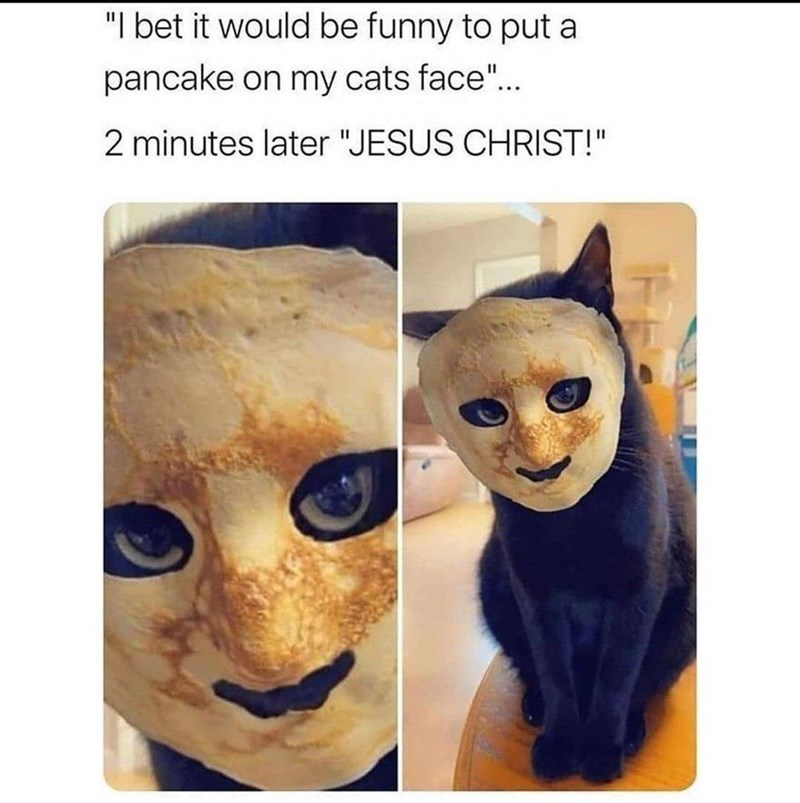 """Cat - """"I bet it would be funny to put a pancake on my cats face""""... 2 minutes later """"JESUS CHRIST!"""""""
