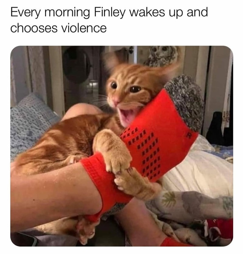 Cat - Every morning Finley wakes up and chooses violence