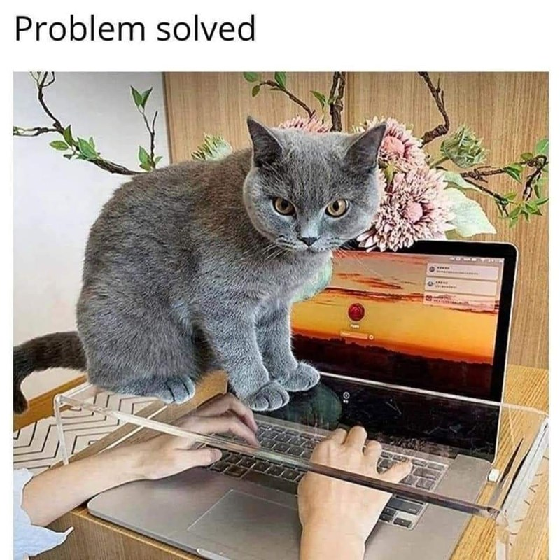 Cat - Problem solved O: