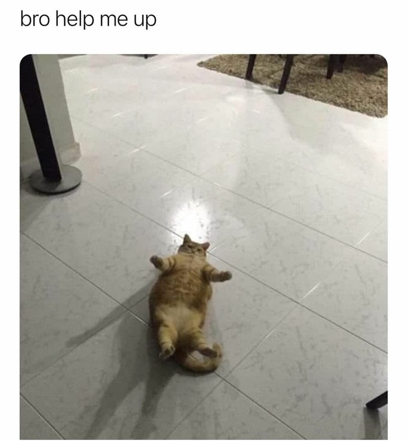 Cat - bro help me up