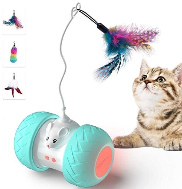Cat - urg