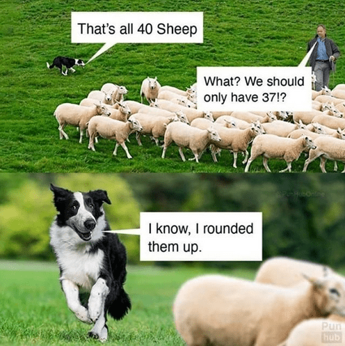 Dog - That's all 40 Sheep What? We should only have 37!? I know, I rounded them up. Pun hub