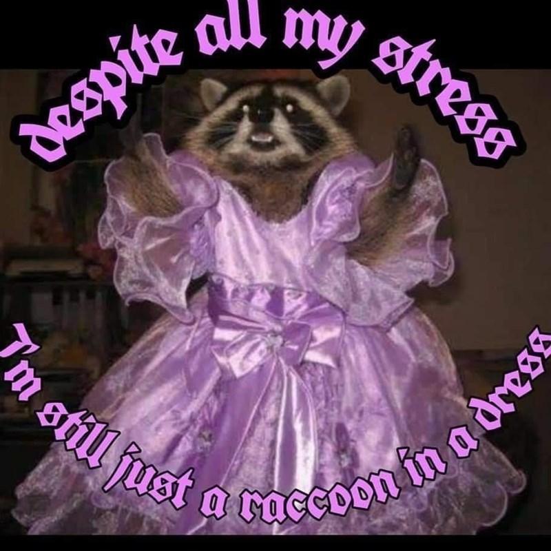 Purple - my stress despite all 2 still fust a raccoon in a dresg 'm