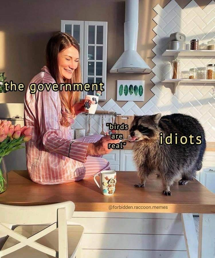"""Table - the government C000 """"birds are real"""" idiots @forbidden.raccoon.memes"""