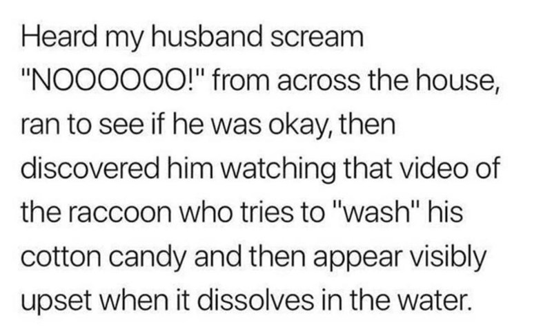 """Font - Heard my husband scream """"NOO0000!"""" from across the house, ran to see if he was okay, then discovered him watching that video of the raccoon who tries to """"wash"""" his cotton candy and then appear visibly upset when it dissolves in the water."""