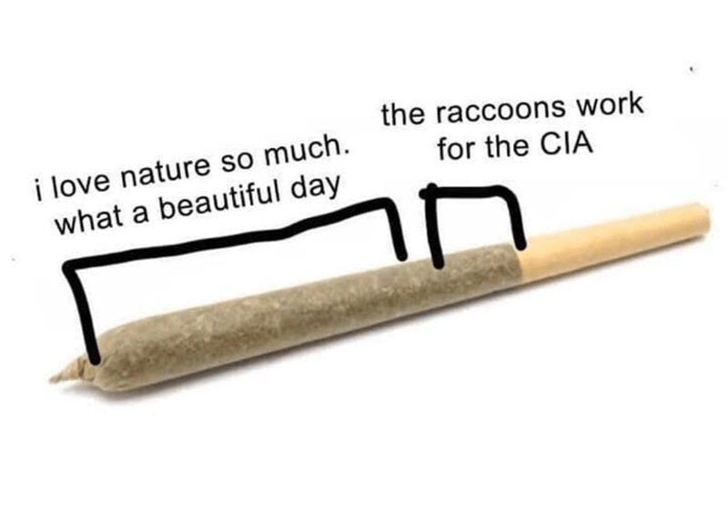 Rectangle - the raccoons work i love nature so much. what a beautiful day for the CIA in