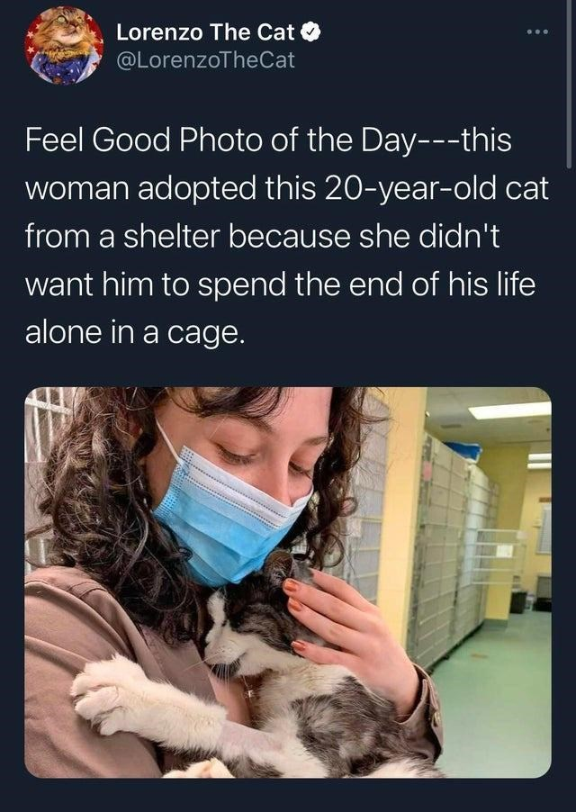 Vertebrate - Lorenzo The Cat O @LorenzoTheCat Feel Good Photo of the Day---this woman adopted this 20-year-old cat from a shelter because she didn't want him to spend the end of his life alone in a cage.