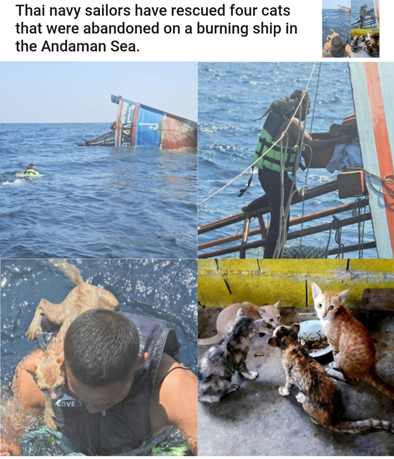 Water - Thai navy sailors have rescued four cats that were abandoned on a burning ship in the Andaman Sea. OVE