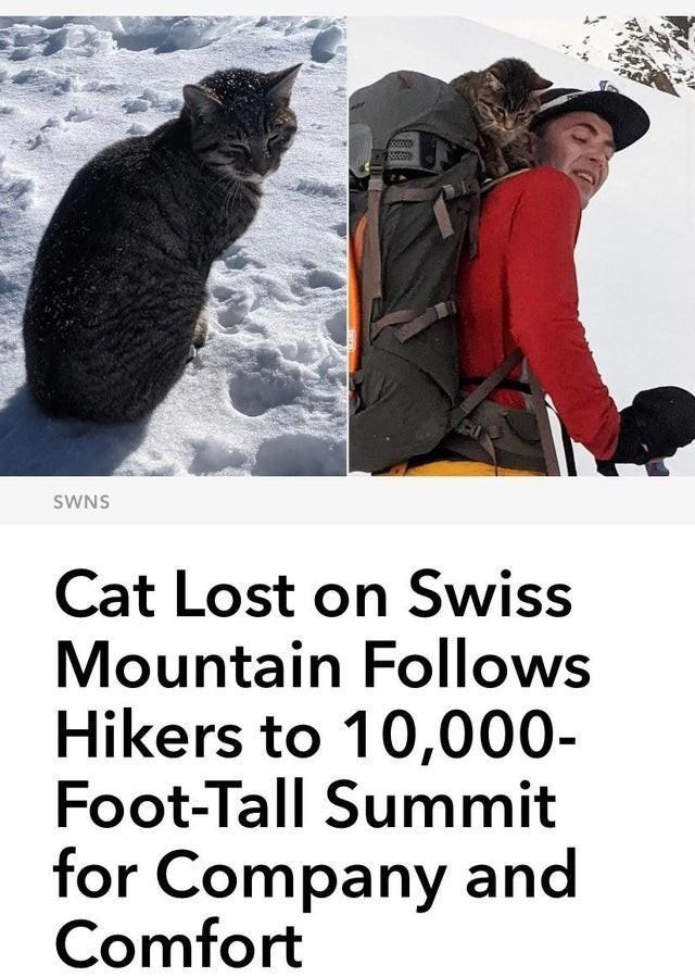 Cat - SWNS Cat Lost on Swiss Mountain Follows Hikers to 10,000- Foot-Tall Summit for Company and Comfort