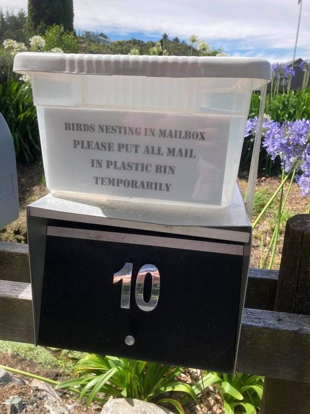 Plant - BIRDS NESTING IN MAILBOX PLEASE PUT ALL MAIL IN PLASTIC BIN TEMPORARILY 10