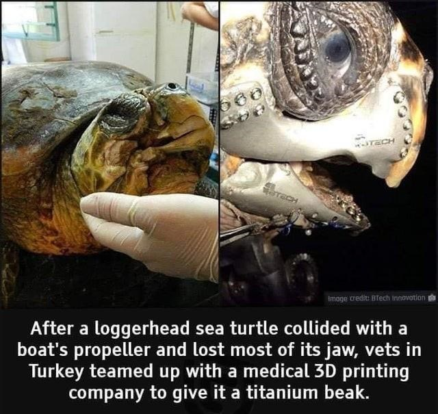 Jaw - TECH Imoge credit: Blech Innovotion After a loggerhead sea turtle collided with a boat's propeller and lost most of its jaw, vets in Turkey teamed up with a medical 3D printing company to give it a titanium beak.