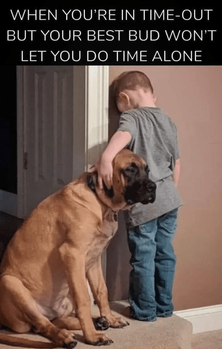 Dog - WHEN YOU'RE IN TIME-OUT BUT YOUR BEST BUD WON'T LET YOU DO TIME ALONE
