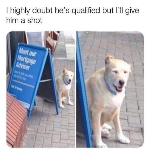 Dog - T ighly doubt he's qualified but l'll give him a shot Meet our Mortgage Adviser Cf dy