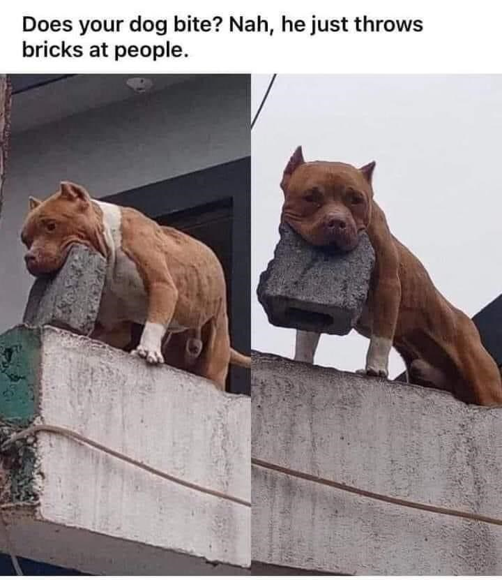Carnivore - Does your dog bite? Nah, he just throws bricks at people.