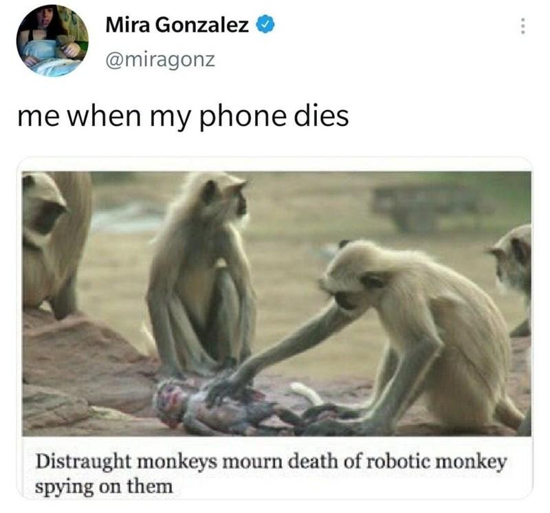 Primate - Mira Gonzalez @miragonz me when my phone dies Distraught monkeys mourn death of robotic monkey spying on them