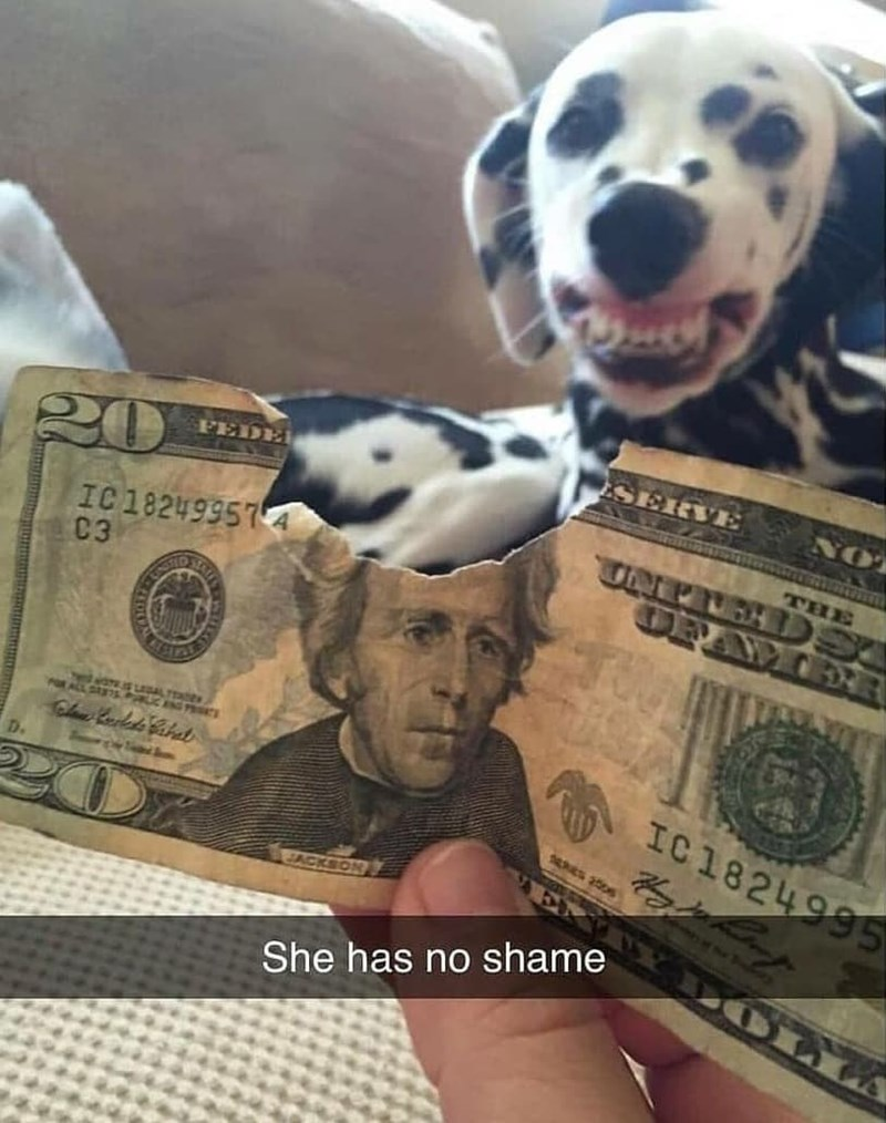 Dog - ESERVE FEDE NO 20 IC18249957 4 C3 THE UNPIEHDS OBEWEER POEALL SAETS PRIC ENC PROIKS Chae Rulds Hahat IC1824995 D. ACKSON She has no shame
