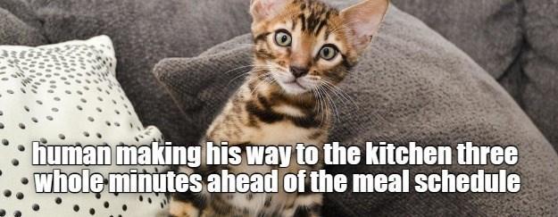 cat memes - 9610101248