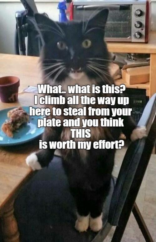 cat memes - 9610102016