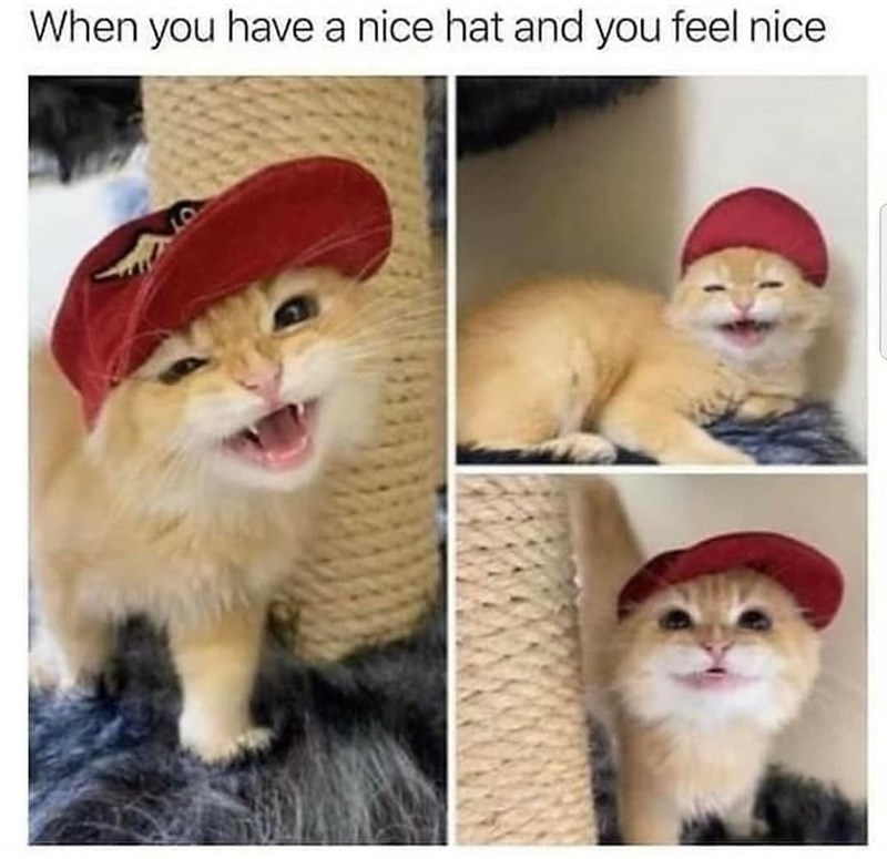 Nose - When you have a nice hat and you feel nice