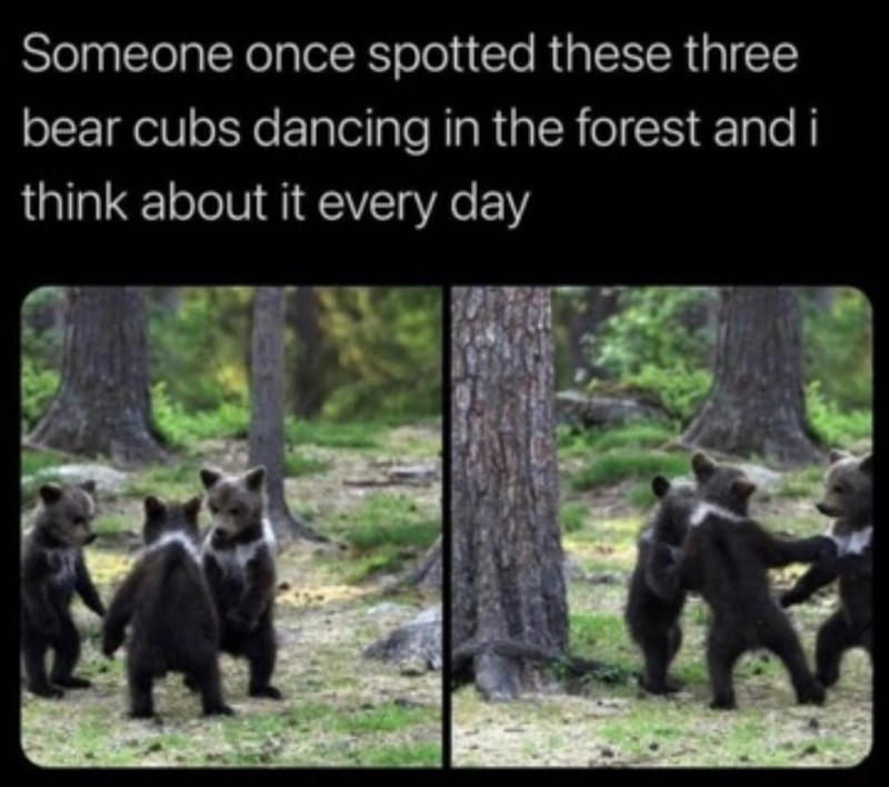 Plant - Someone once spotted these three bear cubs dancing in the forest and i think about it every day