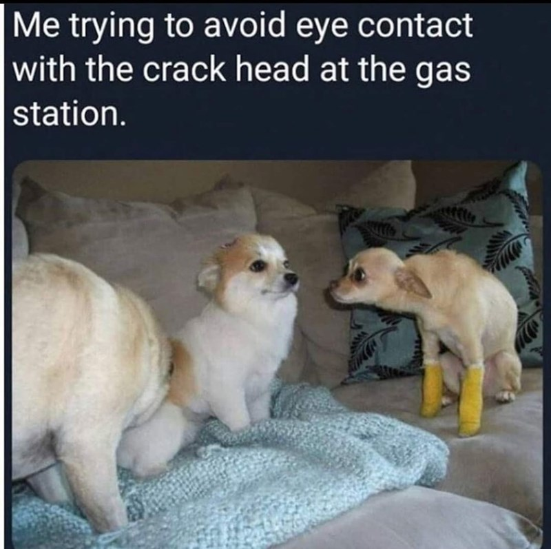Dog - Me trying to avoid eye contact with the crack head at the gas station.