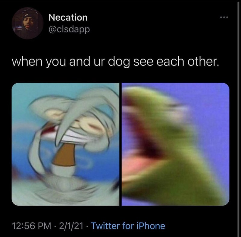 Human body - Necation @clsdapp when you and ur dog see each other. 12:56 PM · 2/1/21 · Twitter for iPhone