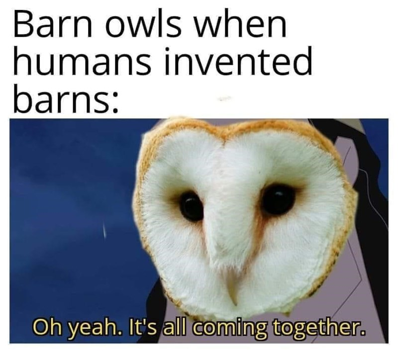 Bird - Barn owls when humans invented barns: Oh yeah. It's all coming together.