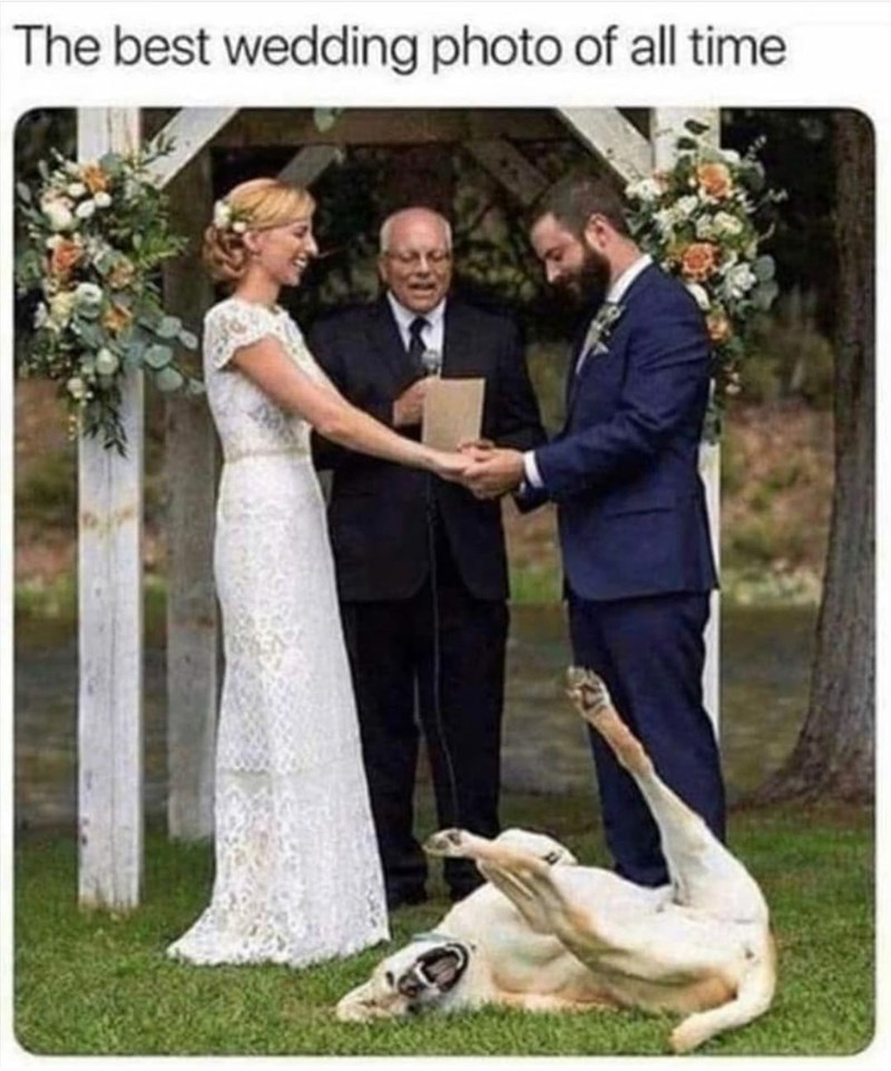 Clothing - The best wedding photo of all time