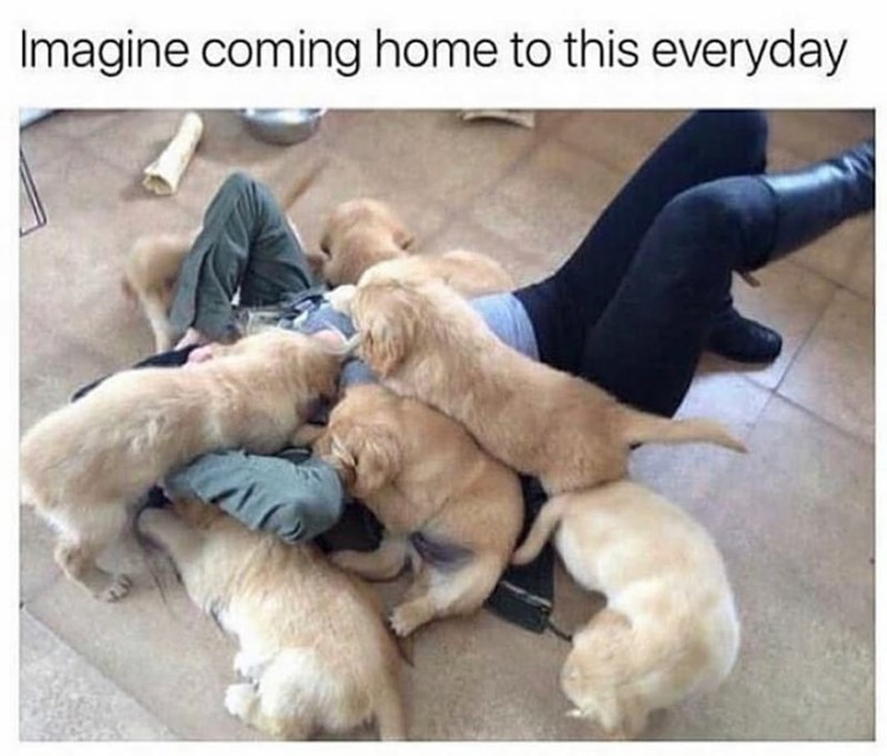 Dog - Imagine coming home to this everyday