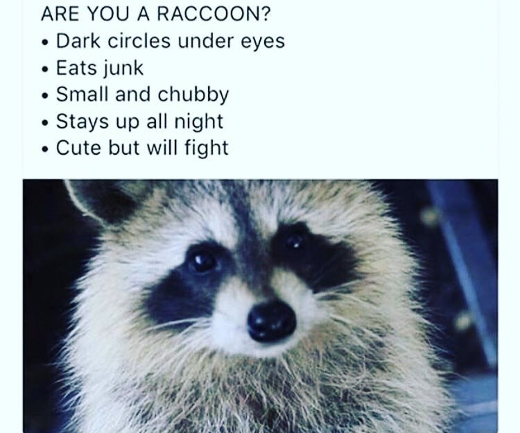 Carnivore - ARE YOU A RACCOON? Dark circles under eyes • Eats junk Small and chubby Stays up all night Cute but will fight