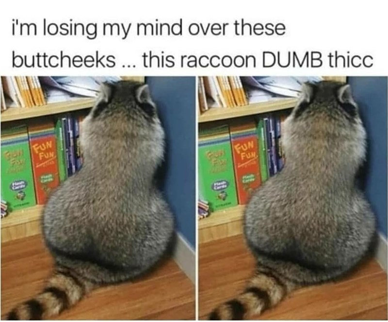 Vertebrate - i'm losing my mind over these buttcheeks ... this raccoon DUMB thicc FUN FUN FOr FUN FUN Plesh CHC Hlash Carts Me Care