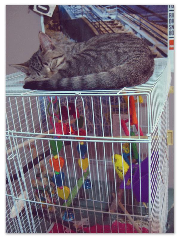 Cat - P 品一