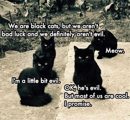 Cat - We are black cats, but we arent bad luck and we definitely arent evil. Meow. Cm a little bit evil. OK, he's evil. But most of us are cool. O promise.