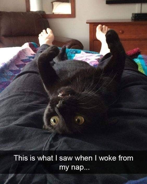 Cat - This is what I saw when I woke from my nap...
