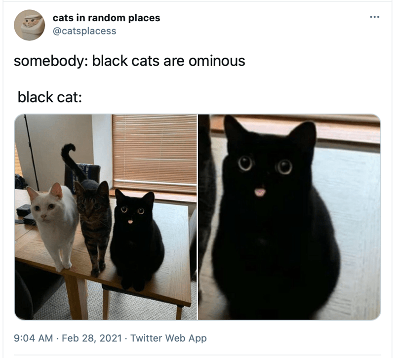Cat - cats in random places @catsplacess ... somebody: black cats are ominous black cat: 9:04 AM · Feb 28, 2021 · Twitter Web App
