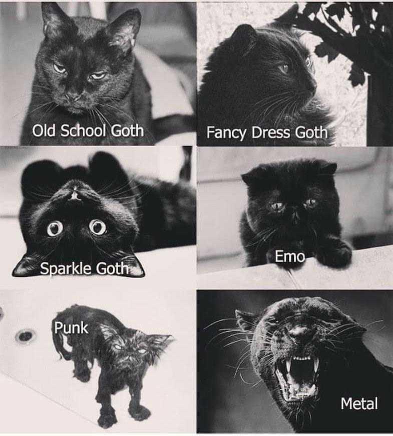 Photograph - Old School Goth Fancy Dress Goth Emo Sparkle Goth Punk Metal