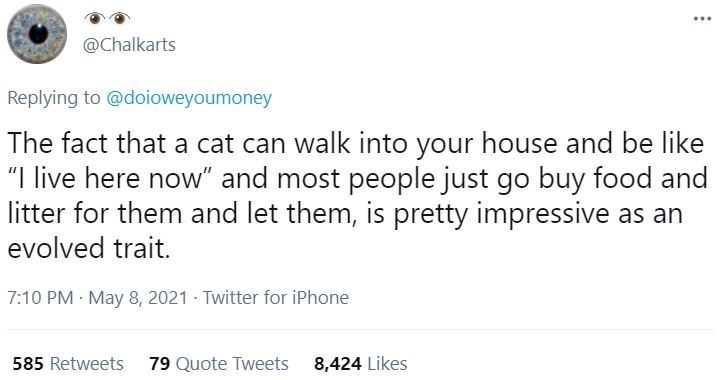 """Font - ... @Chalkarts Replying to @doioweyoumoney The fact that a cat can walk into your house and be like """"I live here now"""" and most people just go buy food and litter for them and let them, is pretty impressive as an evolved trait. 7:10 PM · May 8, 2021 - Twitter for iPhone 585 Retweets 79 Quote Tweets 8,424 Likes"""